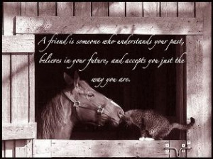 ... facebook horse quotes about life horse quotes horse quotes friendship