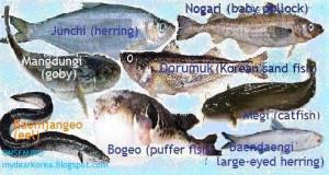 Fish Sayings