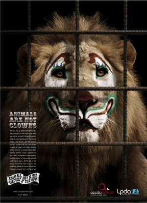 Lion cubs spared from the circus!