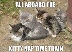 All_aboard_the_kitty_nap_time_train.jpeg