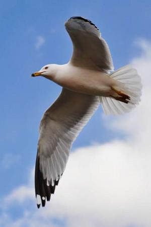 Jonathan Livingston Seagull Quotes Photo By Jiyang Chen Creative ...