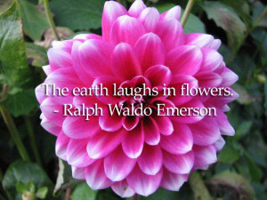40 of the best flower quotes