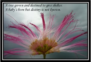 Quotes On Destiny And Choice