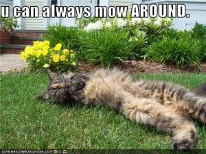 Funny Lawn