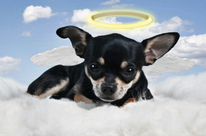Pope Francis Says All Dogs (And Cats) Do Go To Heaven