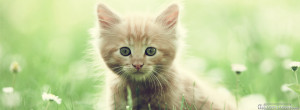 Click below to upload this Cute Kitten Cover!