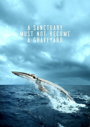 ... : It's called the Southern Ocean Whale Sanctuary for a reason