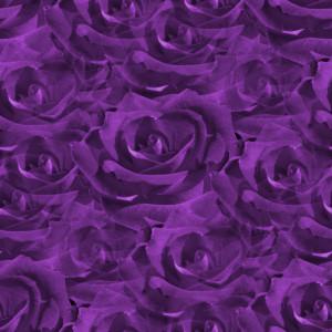 Closeup Purple Roses