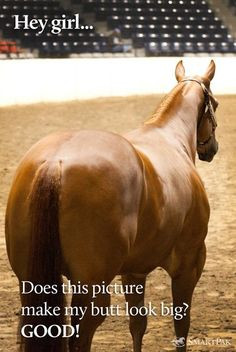 of my horses joke with me that i am obbsessed with looking at a horse ...