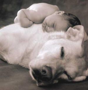 Baby Sleeping On Dog