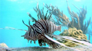 Indian Ocean Animals And Plants Reefs in the indian ocean,
