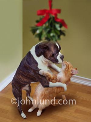Funny Christmas Dog photos and funny Christmas Dog pictures!