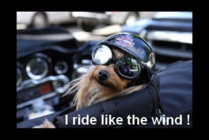 harley funny biker quotes
