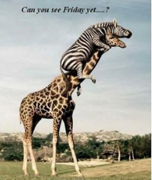 funny animal photo