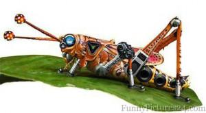 Funny #1 Grasshopper Funny #2 Grasshopper Funny #3 Grasshopper Funny ...