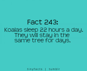Fact Quotes (96)