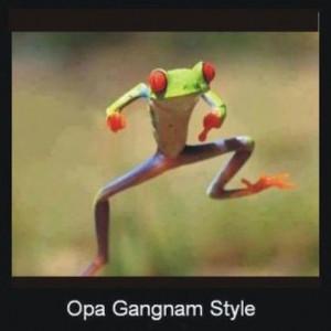 ... funny,#fun,#laughing,#lol,#rolf,#crazy,#humor,#omg,#frog,#gangam