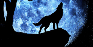 Quote Wolf Howling at Moon