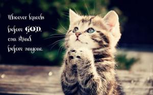 Kitten kneeling before God