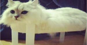 social lieutenant dan weekly roundup of the best cats vs cancer social ...