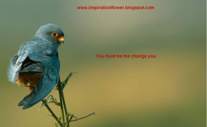 Beautiful Birds Wallpapers with Inspiration Quotes