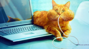 funny cat eating computer mouse