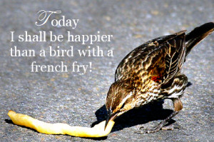 french fry bird photo: Bird with French Fry Bird-Today.png