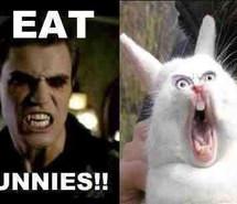 bunnies-funny-lol-stefan-salvatore-Favim.com-954777.jpg