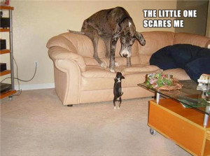tagged with funny scared animal pictures 25 pics funny pictures