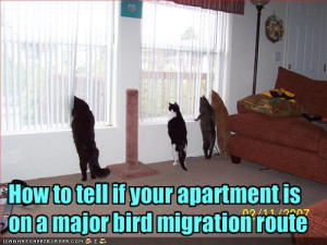 funny-pictures-your-apartment-is-on-a-bird-migration-route1