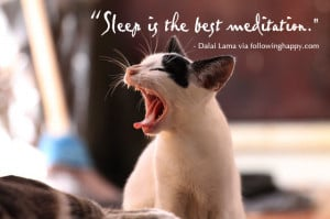 It's no secret that cats love to sleep, that's probably why they ...