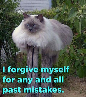 Funny Animal Pictures With Quotes For Facebook Animal quotes graphics
