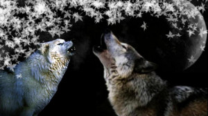 Howling wolves quotes lupus white animal
