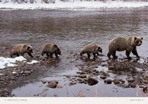 grizzly-bear-hungry-as-a-bear-page-5.jpg