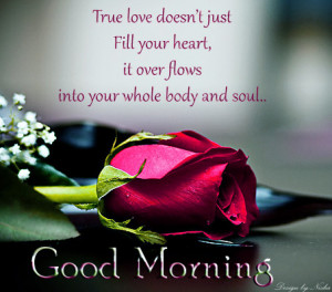 True love quotes with good morning wallpaper ! Red rose for good ...