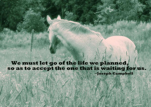 In The Meadow Quote Photograph