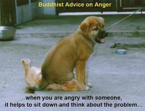 Funny Picture -- Buddhist Anger Management
