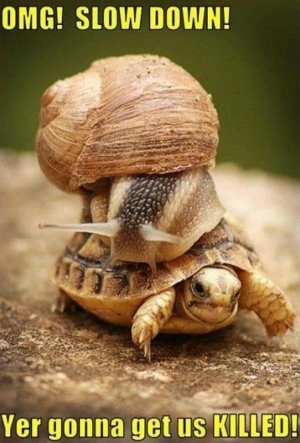 Snail and tortoise: