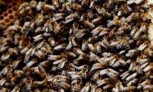 Bees-007.jpg