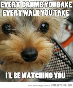 cute puppy dog sad face