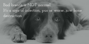 Create awesome social media images to inspire your veterinary clients