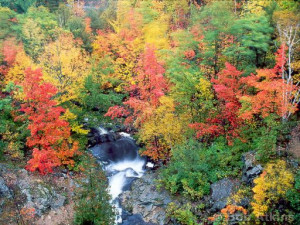 fall_foliage_TEMP0444.JPG