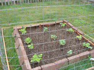 Vegetable Garden Quotes Pictures
