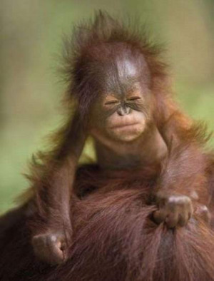 Funny Monkey Anger Face Picture