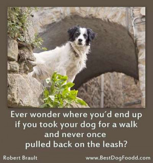 Tributes To The Dogs – Dog Sayings