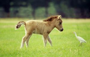 My Little Pony - 2007HQ