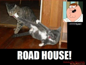 Family Guy Roadhouse! [Fighting Cat gets a