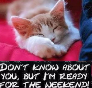 quotes quote friday kitten happy friday tgif days of the week friday ...