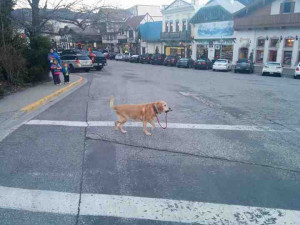 STRONG INDEPENDENT DOG WHO DON'T NEED NO MAN