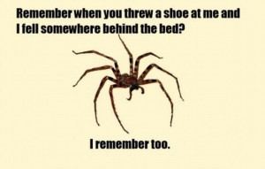 funny-pictures-of-a-spider-hidden-behind-your-bed-coming-back-for ...